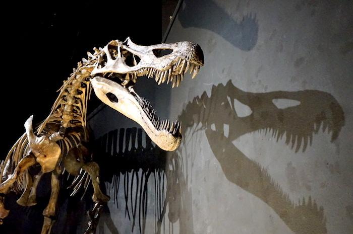 スピノサウルス復元骨格 福井県立恐竜博物館所蔵