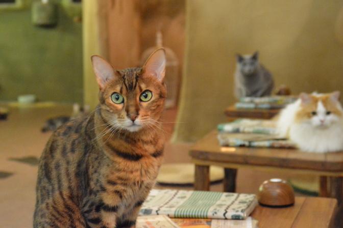 猫スタッフの名前や特徴などが書かれた冊子が各テーブルにあります