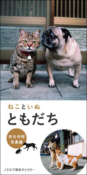 岩合光昭写真展「ねこといぬ ともだち」