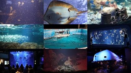 新江ノ島水族館「おひとりさま水族館」でバックヤードツアー実施決定、前回イベントで振り返る見所紹介