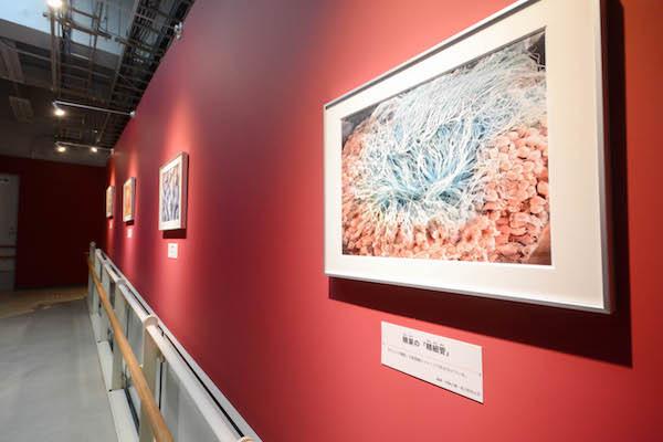 第2章と第3章の間では、彩色された臓器の顕微鏡画像が見られる