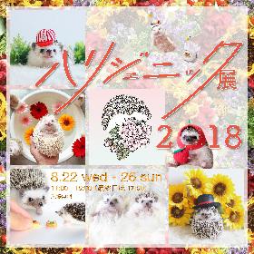 ハリネズミフェスティバル『ハリジェニック展2018』が開催 有名ハリネズミの写真からハンドメイド作品まで