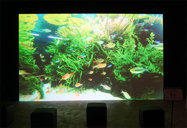 すみだ水族館「自然水景」の水中動画。臨場感溢れる映像により、没入感を味わえる。