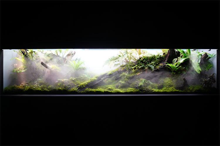ネイチャーパルダリウム水槽。日常の中で熱帯雨林を見ることができる。