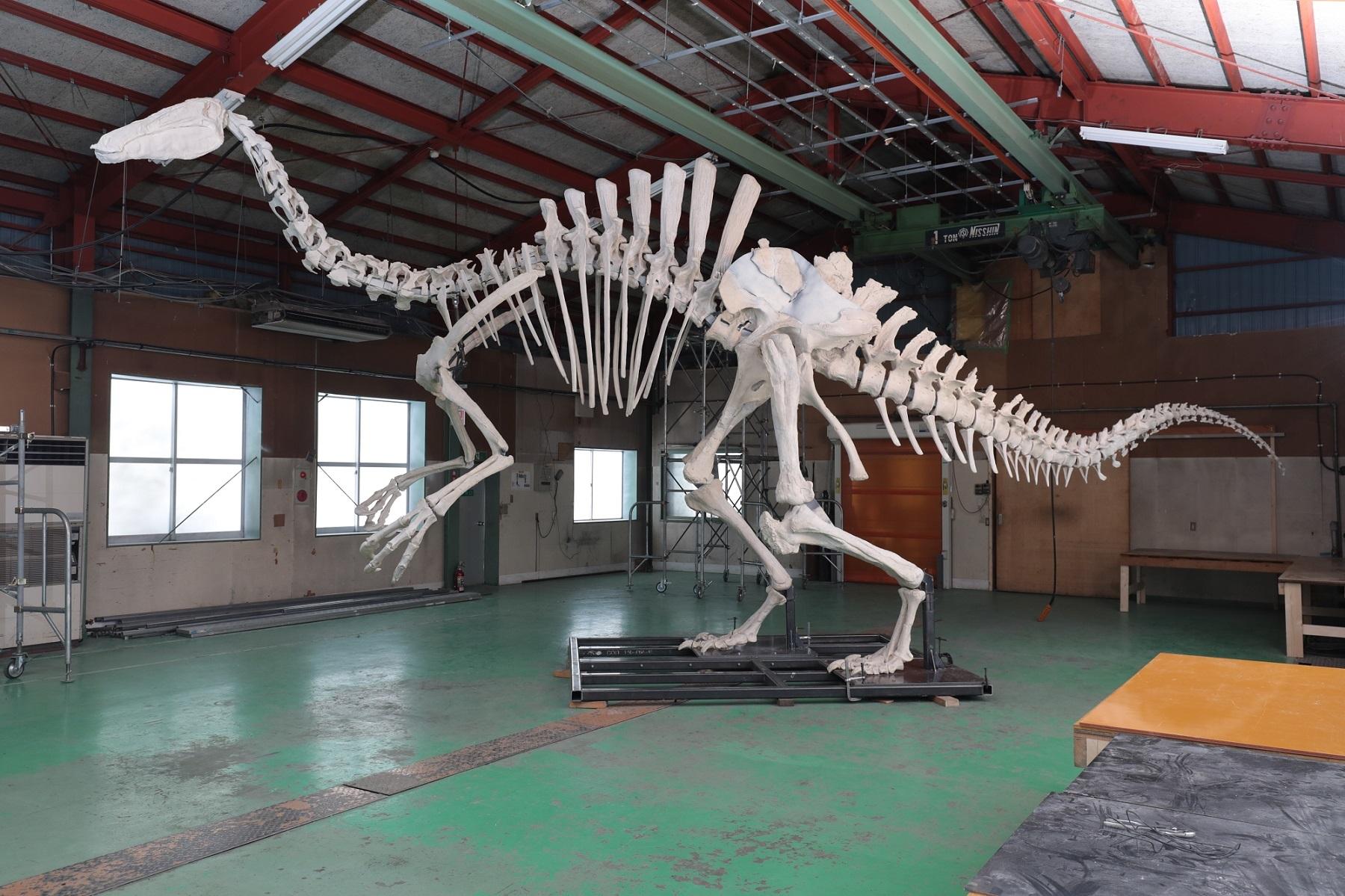 デイノケイルス全身復元骨格 (c) Institute of Paleontology and Geology of Mongolian Academy of Sciences