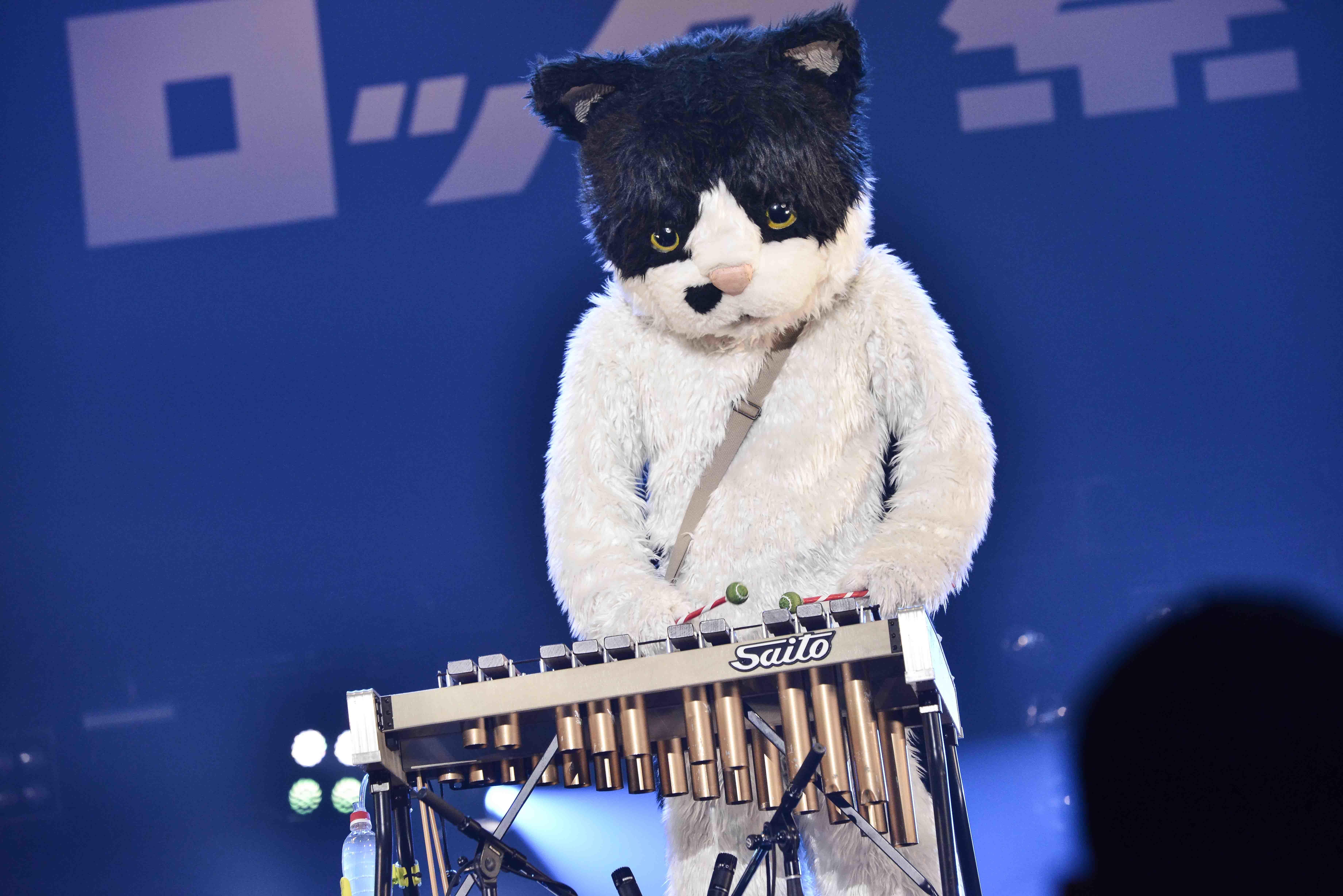のむぎ(猫) 撮影=Rui Hashimoto(SOUND SHOOTER)