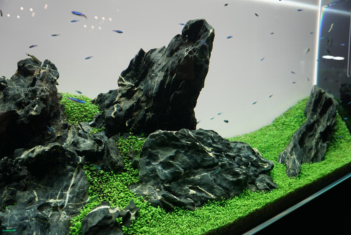 奇岩を思わせる石による奥行きあるレイアウト