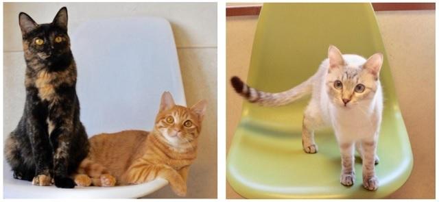 会場で触れ合える猫(イメージ)