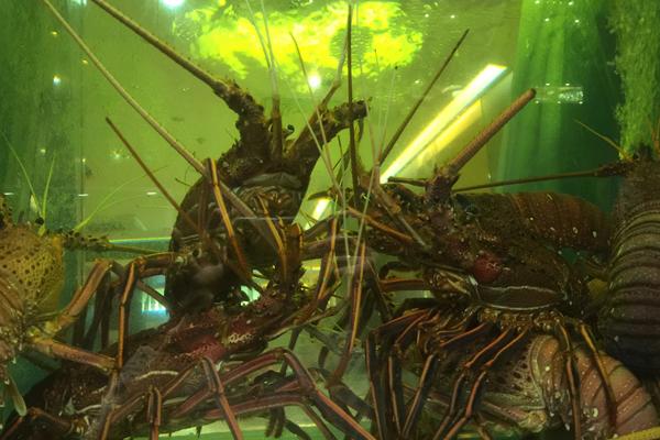 街を歩くと水槽で甲殻類がよく泳いでいる