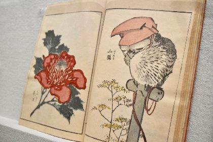 葛飾北斎が描いた動物たちを集めた『北斎アニマルズ』展レポート 森羅万象すべてに魂を入れて描いた浮世絵師