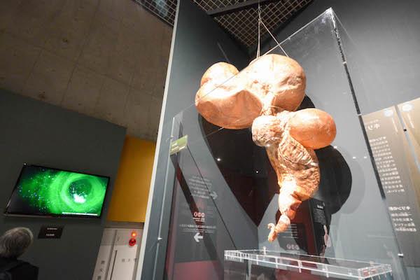 巨大な「キリンの胃」も展示