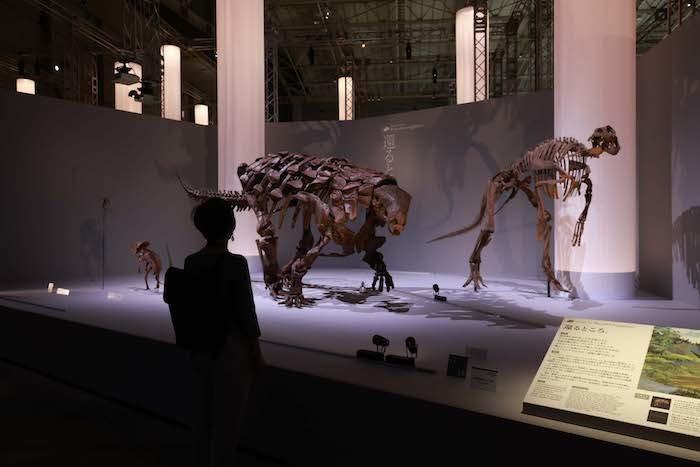 「フィールドツアー」展示風景(デンヴァーサウルス (C)Tank(TM)BHIGR、エドモントサウルス)