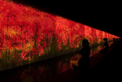 チームラボのサウナ『TikTok チームラボリコネクト』に季節限定のアート空間が登場 10月18日より秋の景色に