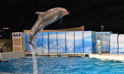 """新江ノ島水族館をゆっくり満喫できる""""おひとりさま""""限定夜のイベント第三回開催決定"""