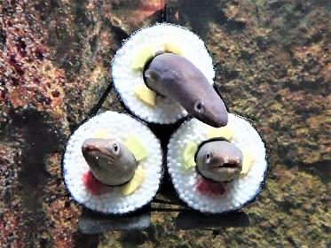 仙台うみの杜水族館、期間限定「アナゴの恵方巻水槽」登場