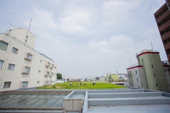 屋上菜園 (c)KoichiWakui