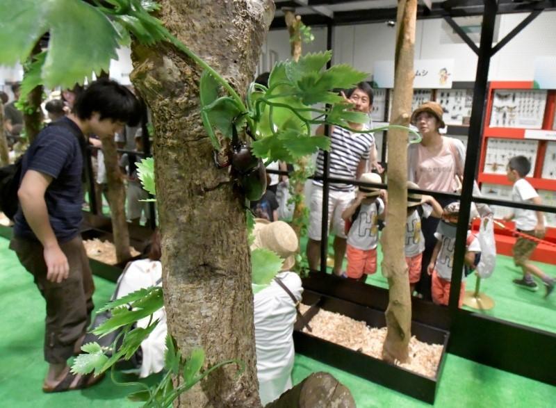 ■大昆虫展in東京スカイツリータウン(R) ~みんなで応援!昆虫メダリスト~/ふれあいの森コーナー(過去の様子)(C)大昆虫展実行委員会