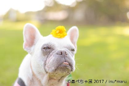 """ブサカワな""""鼻ぺちゃ犬""""の写真展が浅草橋にて開催 フレンチブルにパグにチワワまで、インスタ有名犬が大集合"""