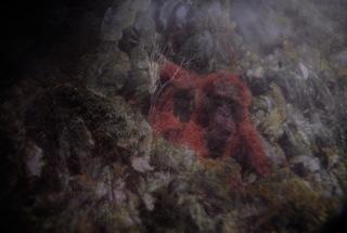 鈴木 諒一「観光-動物-」:2011、ラムダプリント、567mm×808mm