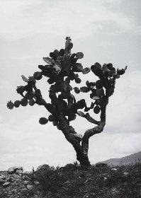岡本太郎のまなざしを追体験する『岡本太郎の写真』展に200点超