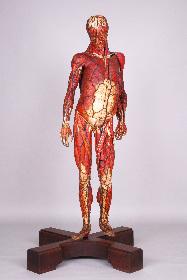 人類はどのように「人体」を理解してきたのか? 特別展『人体 -神秘への挑戦-』が2018年に開催