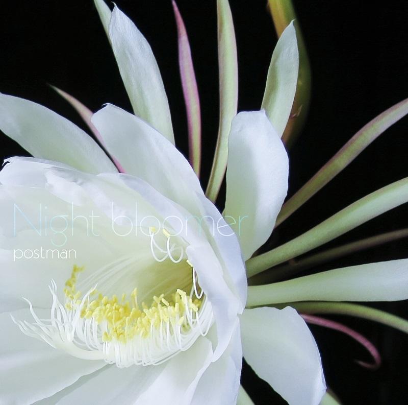 『Night bloomer』
