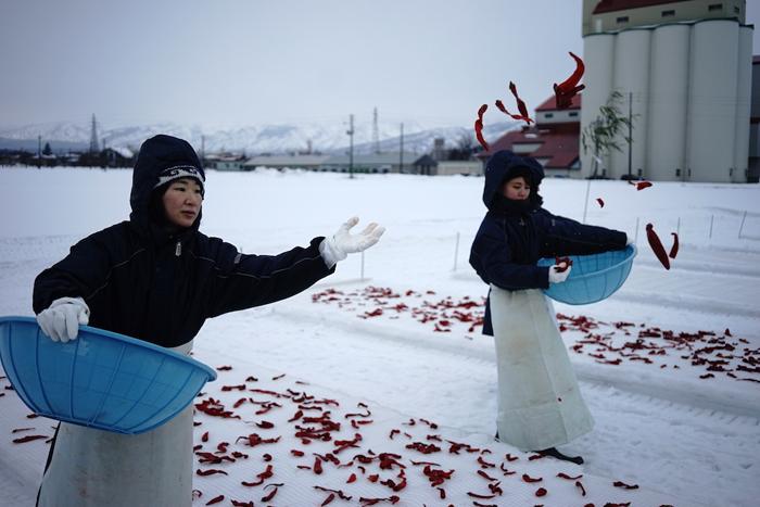 「かんずり」大寒の日の特別な雪晒しの様子(新潟・妙高) 撮影:小倉ヒラク