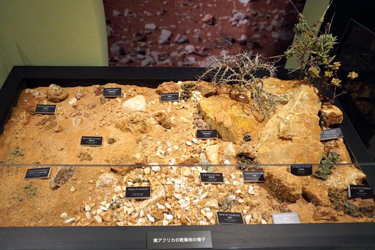 南アフリカの乾燥地の様子。下部にハウォルチア属やアヴォニア属の姿も。