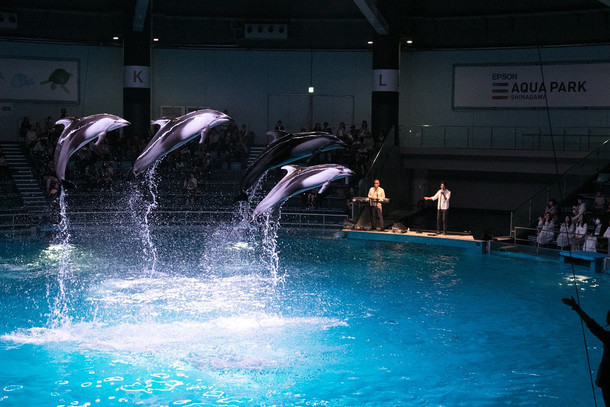 「AQUA PARK × Skoop On Somebody Special Dolphins Performance」の様子。