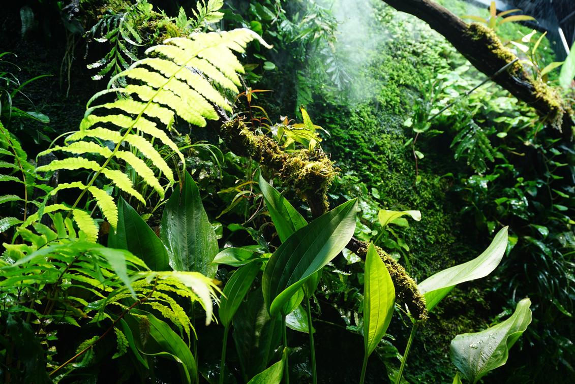 熱帯雨林の中にいるような臨場感