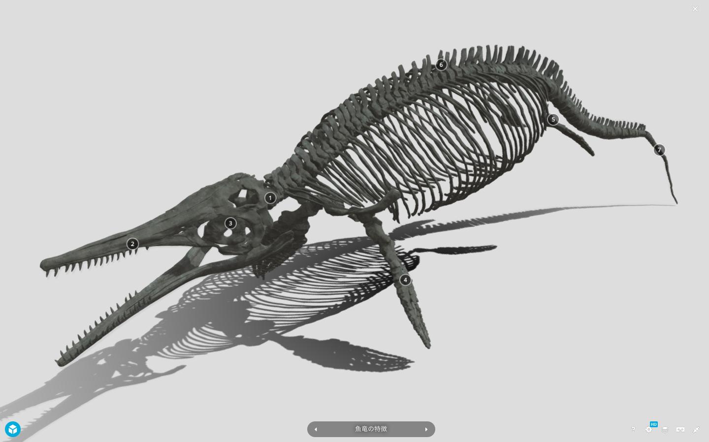 ステノプテリギウスのデジタルモデル(注釈つき) (ホームページより引用:群馬県立自然史博物館)