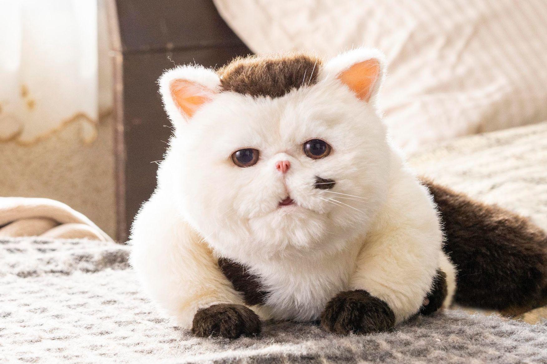 神木隆之介演じるふくまる (C)「おじさまと猫」製作委員会』