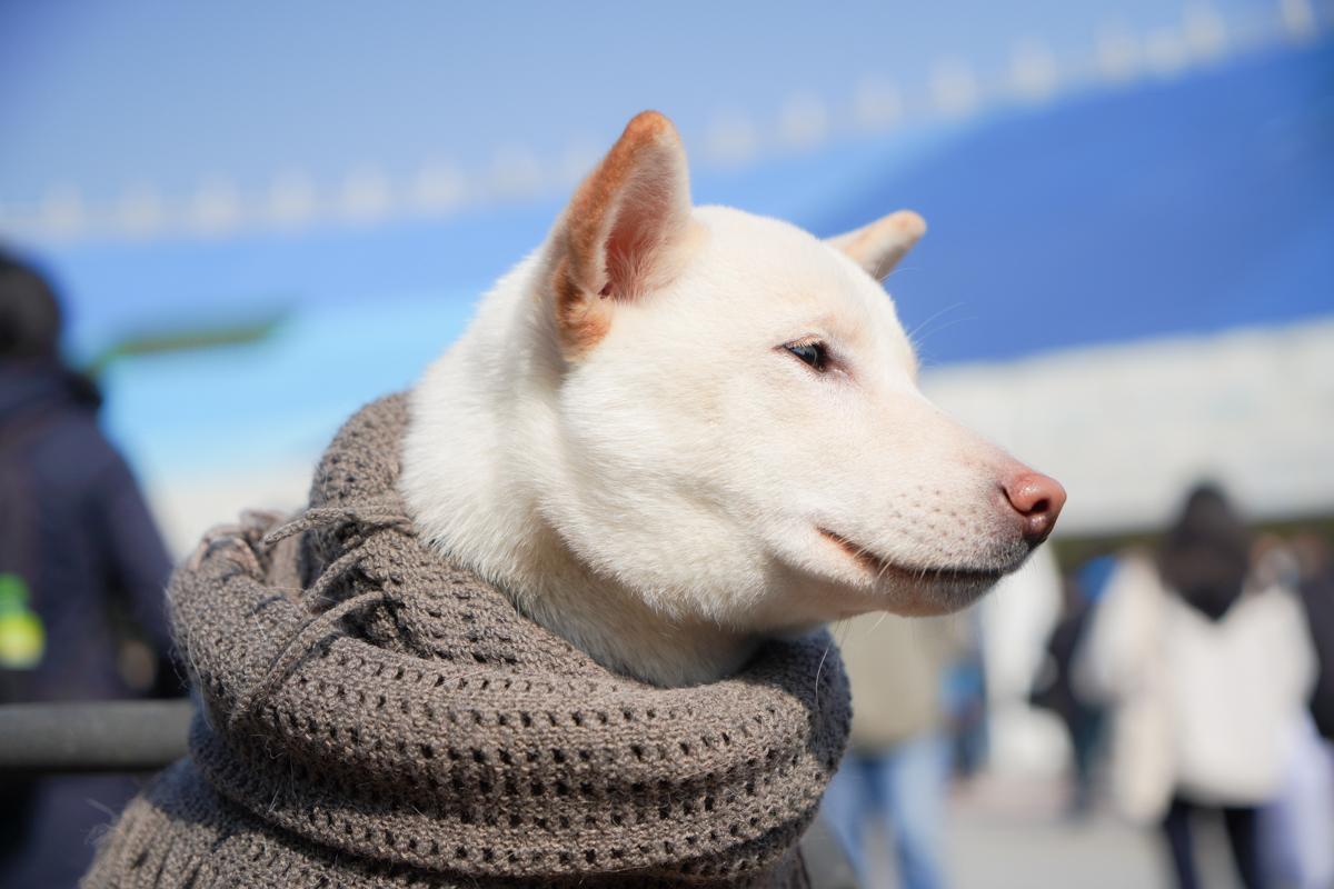 会場にかわいい犬がいた