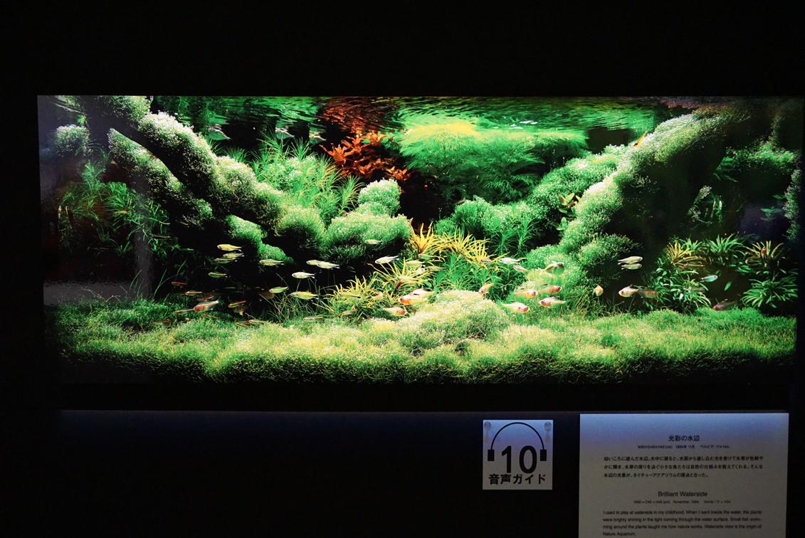 天野尚「光彩の水辺」1994年11月 ベルビア