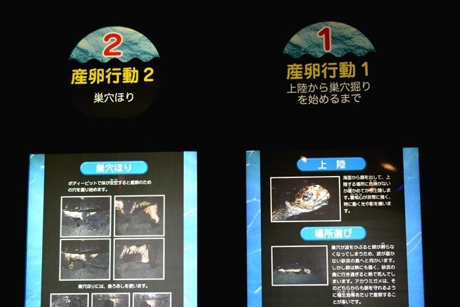 ウミガメの産卵について解説
