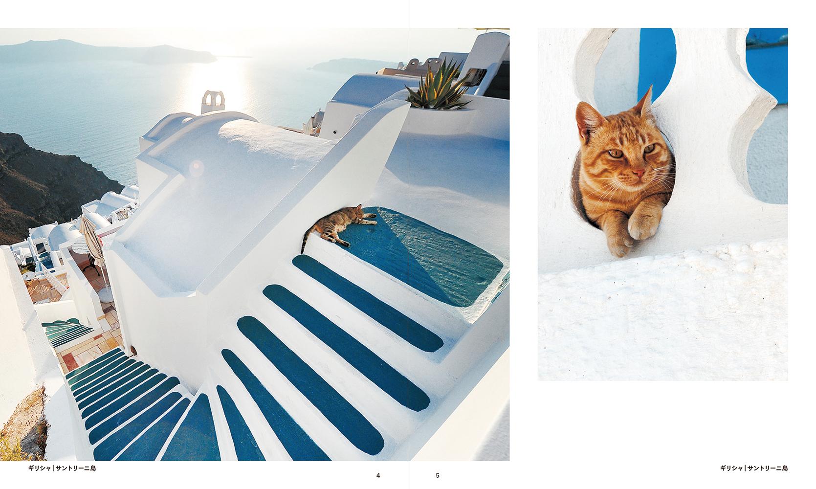 『世界の街猫』