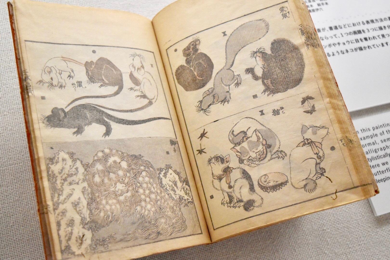 葛飾北斎 『三体画譜』栗鼠 猫 鼠 獅子 年未詳 すみだ北斎美術館所蔵