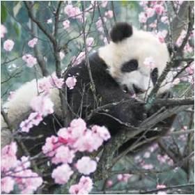 上野動物園の「香香(シャンシャン)」公開記念、『パンダ写真展』 パンダグッズを集めたポップアップショップも
