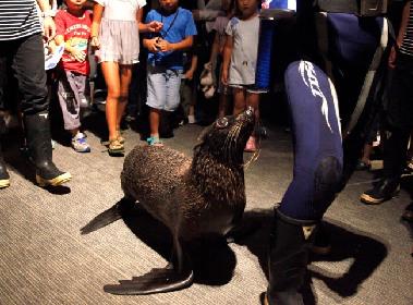 戌(いぬ)年を祝うのはオットセイとチンアナゴ!? すみだ水族館で新年の催しが多数開催