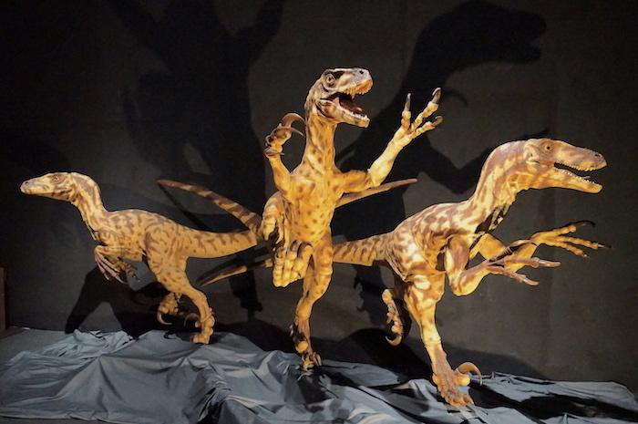 ドロマエオサウルス科の恐竜復元模型 福井県立恐竜博物館所蔵
