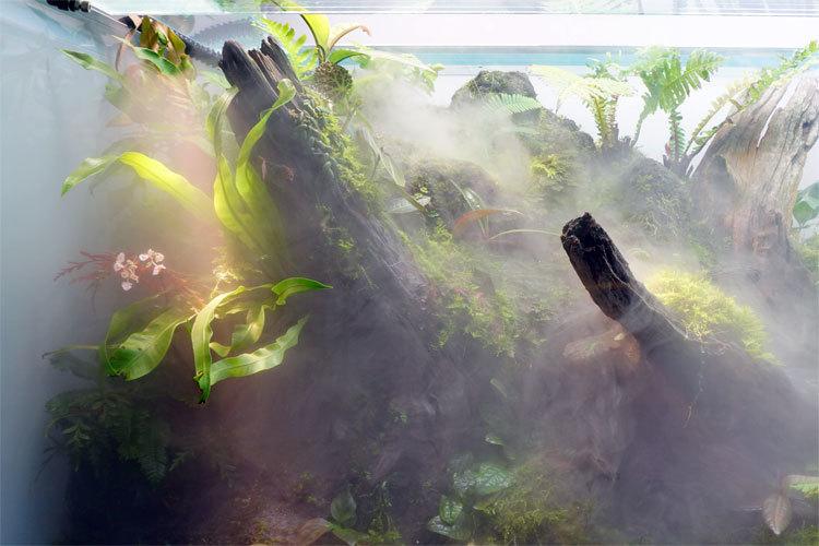 ネイチャーパルダリウム水槽では、霧が発生すると光芒が見えることも。