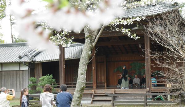 シテも舞い、桜も舞う(撮影:u1729)