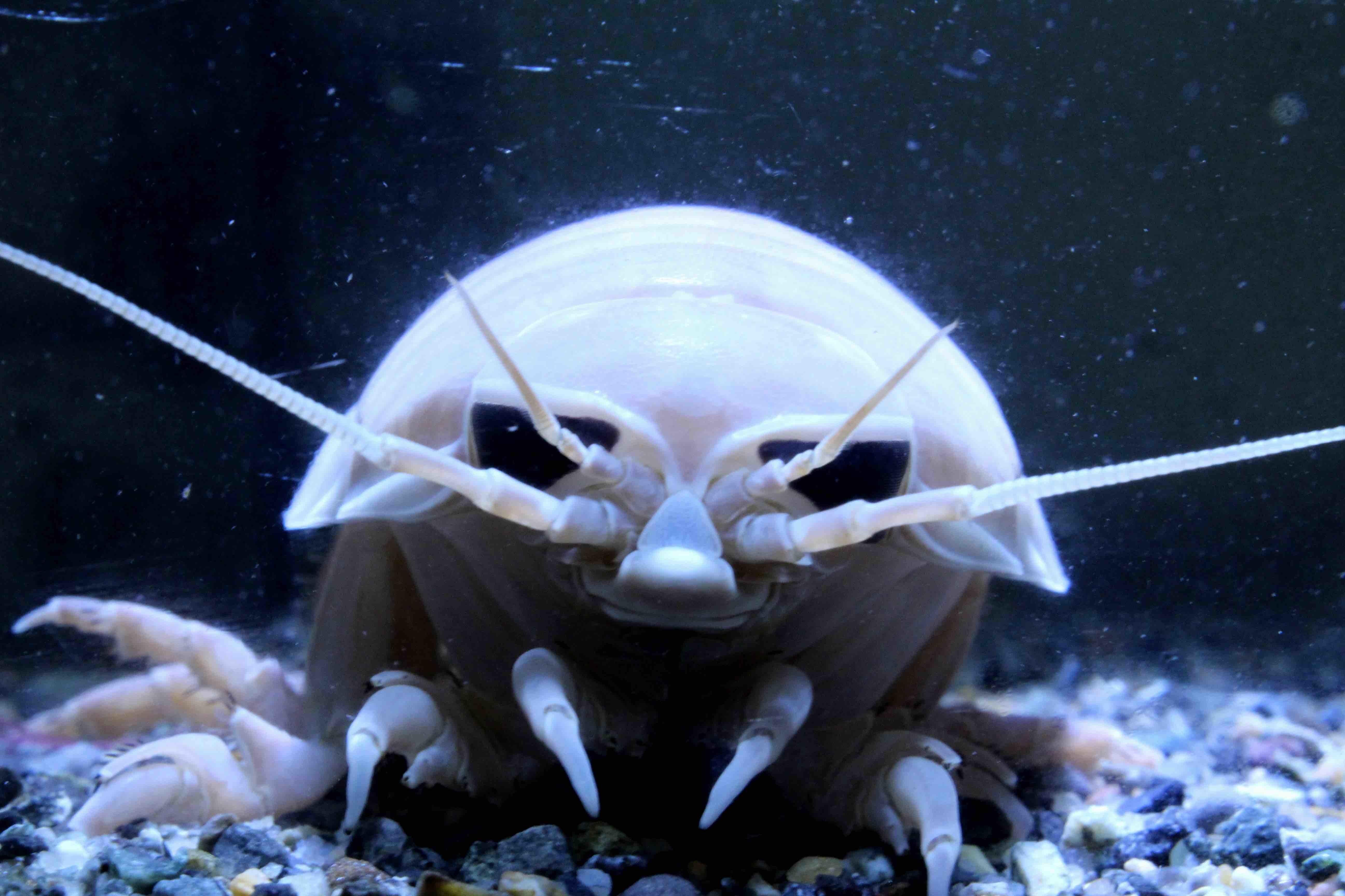 深海生物」に特化したエリアが誕...