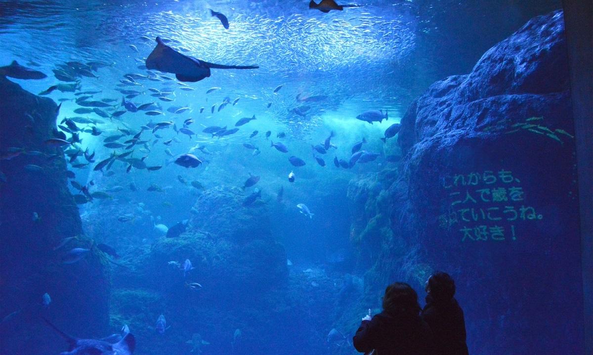相模湾大水槽メッセージ投影(新江ノ島水族館)