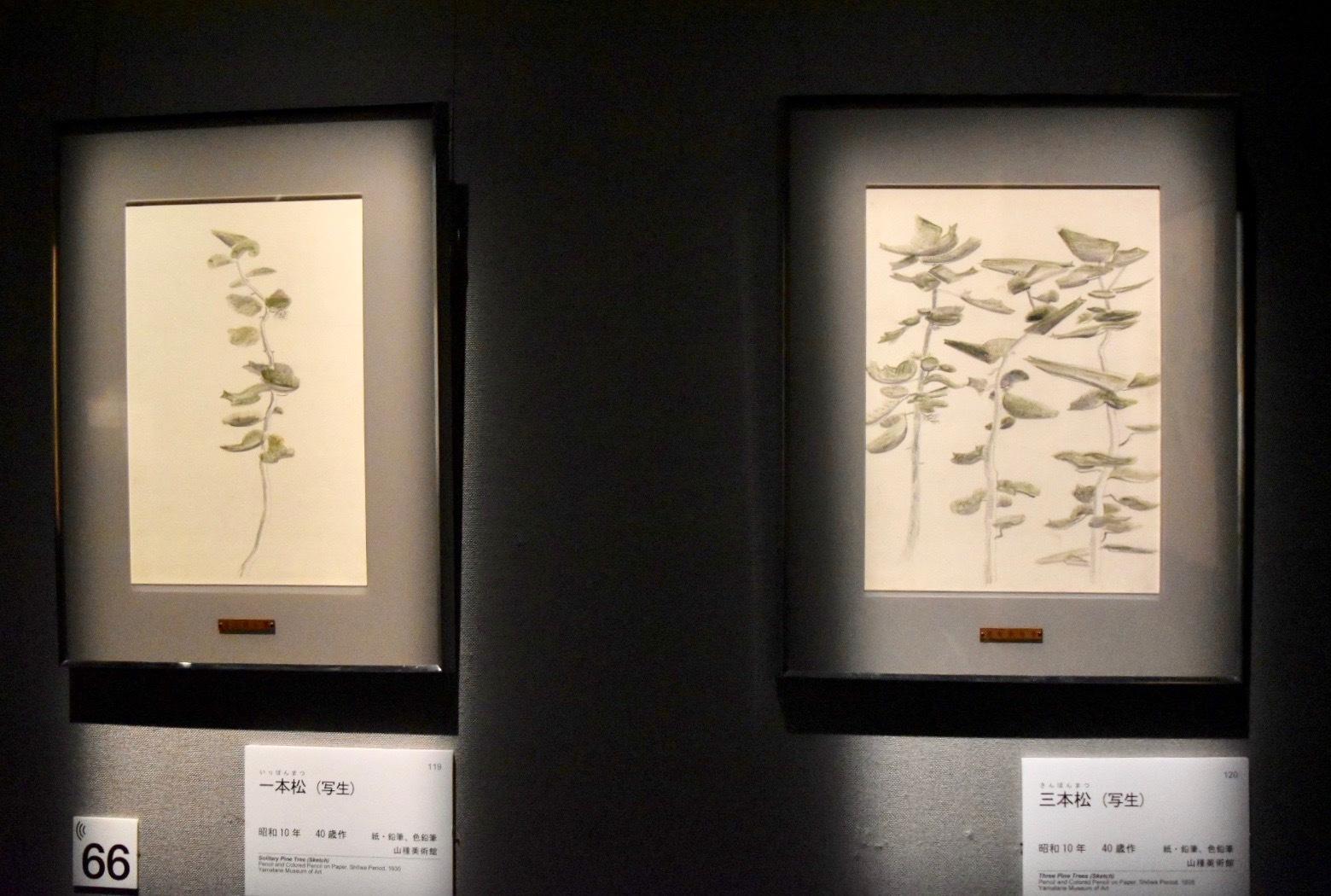 左:速水御舟 《一本松(写生)》 昭和10年 山種美術館蔵、右:速水御舟 《三本松(写生)》 昭和10年 山種美術館蔵