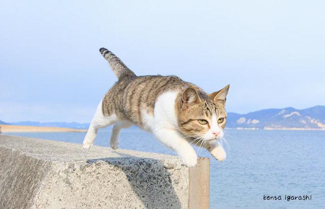 写真家・五十嵐健太 作品