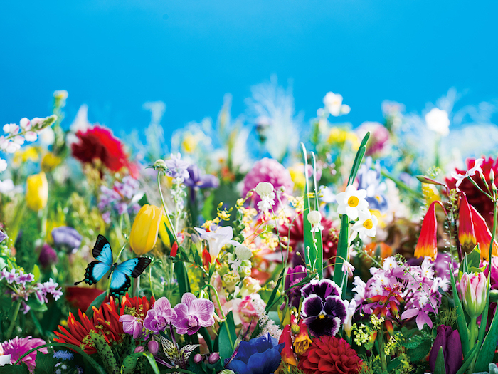 earthly flowers, heavenly colors (2017) (C)mika ninagawa, Courtesy of Tomio Koyama Gallery