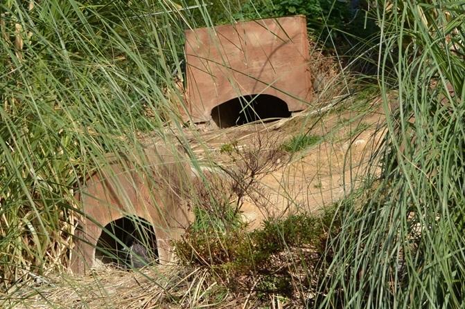 左の巣にはペンギンが入居中