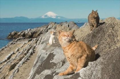 富士山が望める絶景スポットにキュートなニャンコ出没!