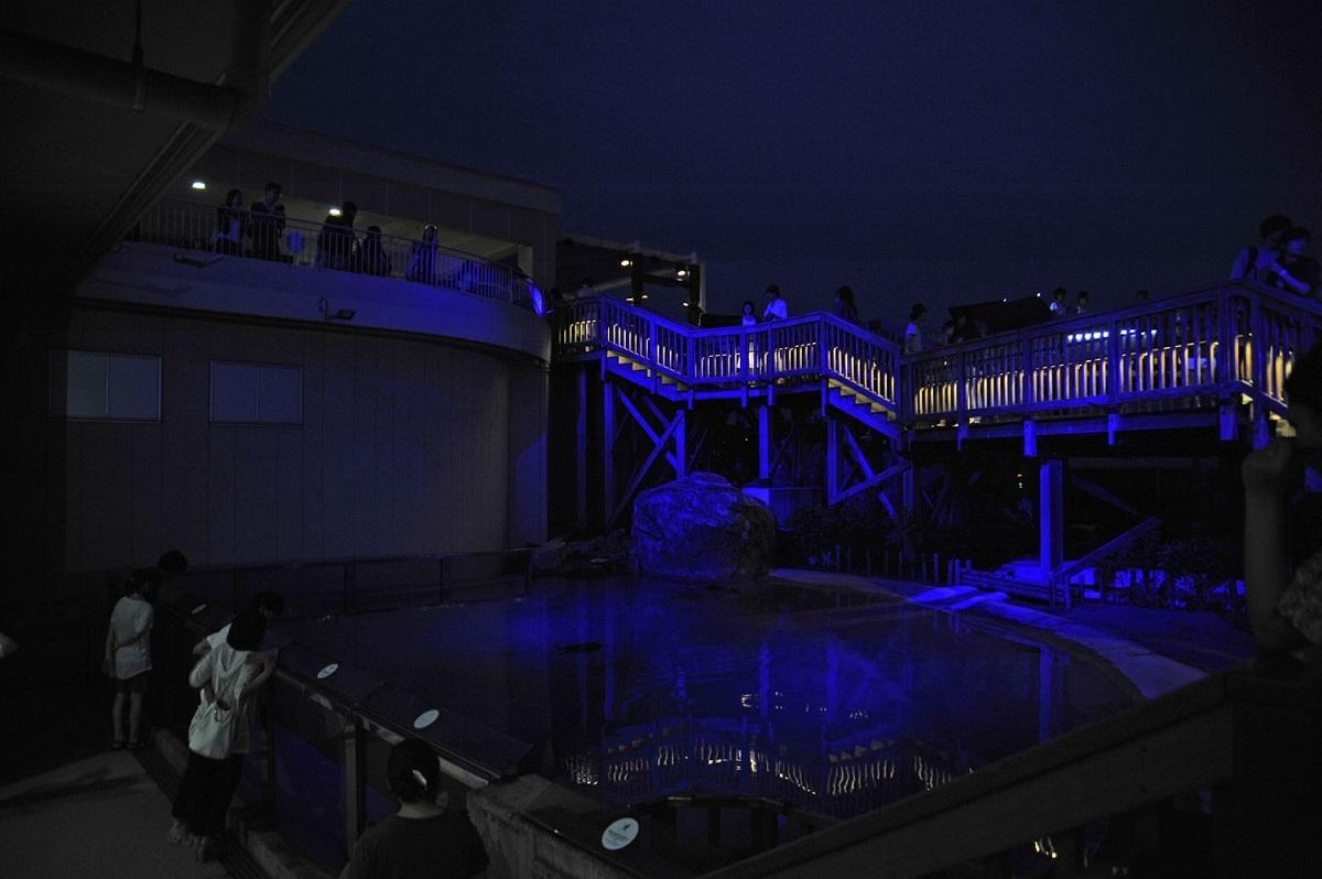 ウミガメの浜辺(新江ノ島水族館)